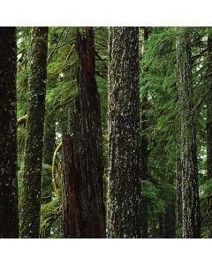 Evergreen Forest Roomba e5 Skin