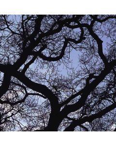 Tree Branches Roomba e5 Skin