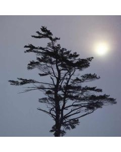 Tranquil Tree Roomba e5 Skin
