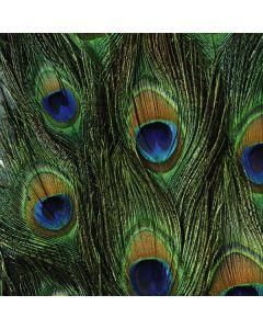 Peacock Roomba 880 Skin